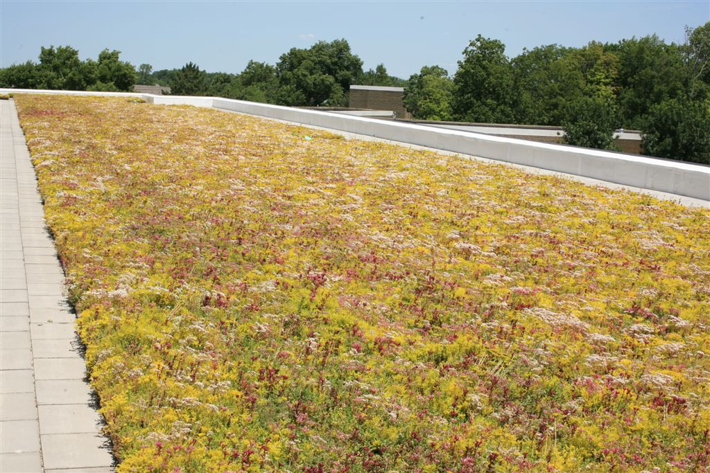 entire installation of green roof