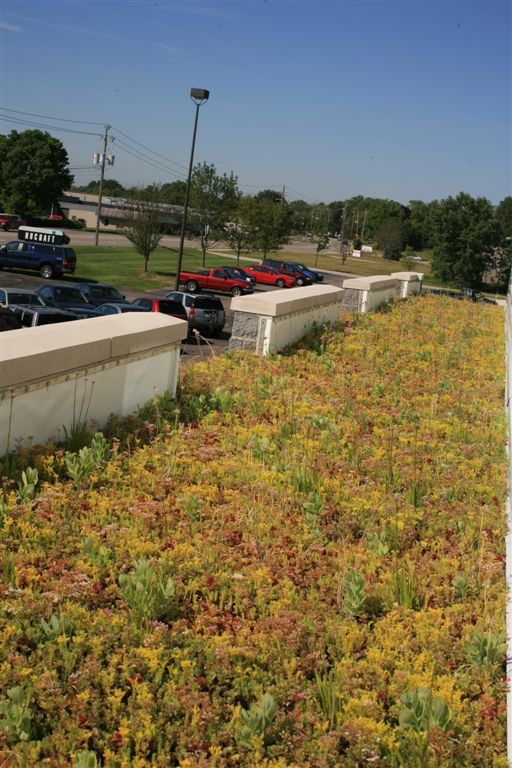 fall season of the green roof system