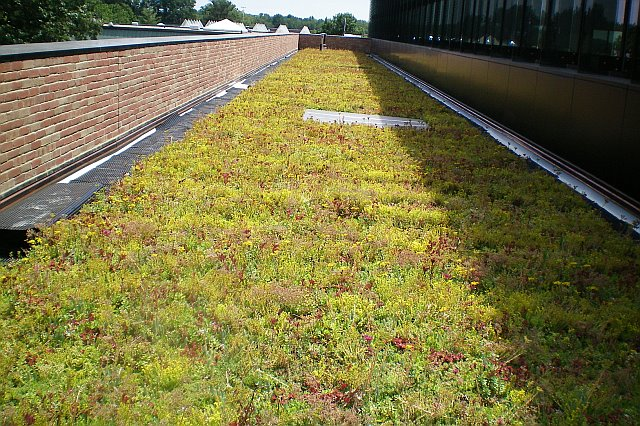 plantings down the length of the building roof