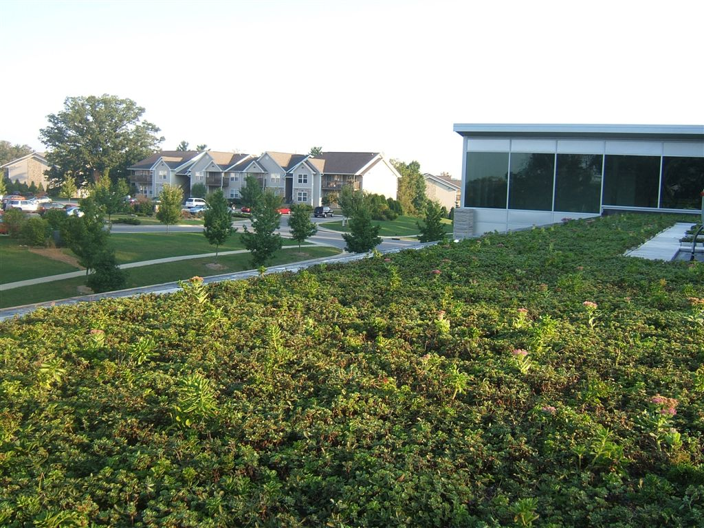 green roof system looking towards local residences