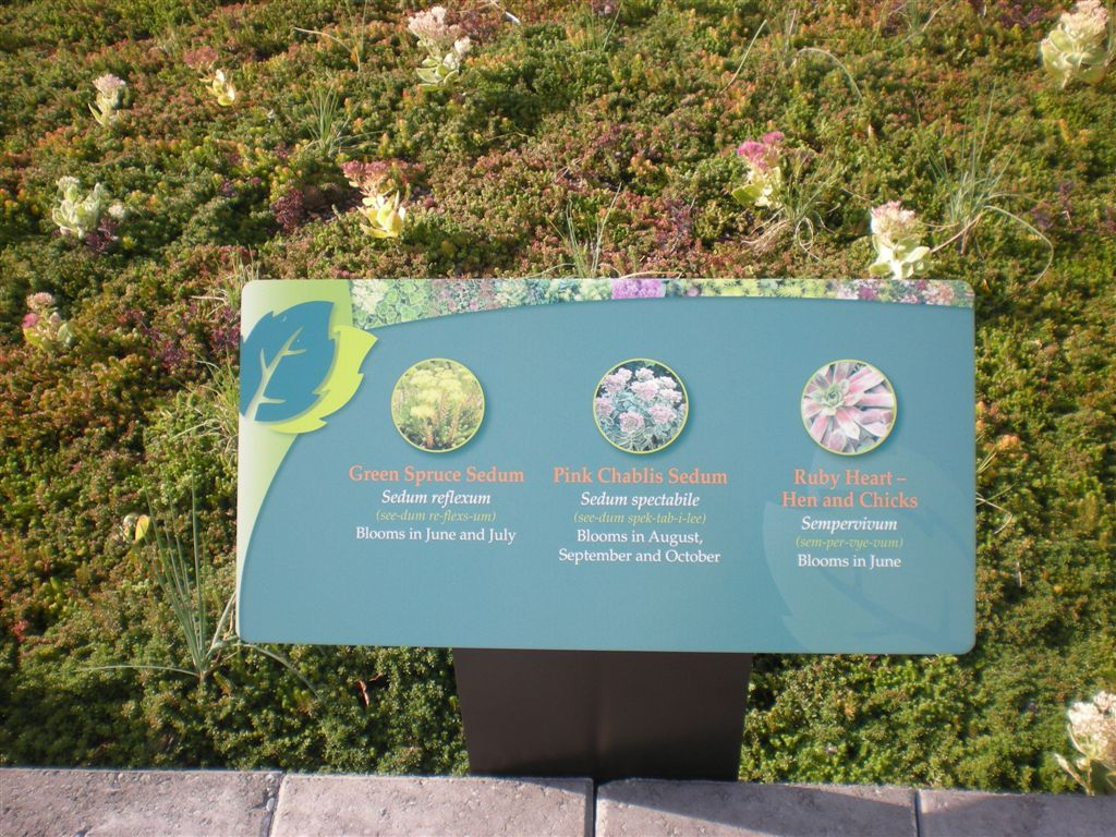 description of the plants installed on the roof