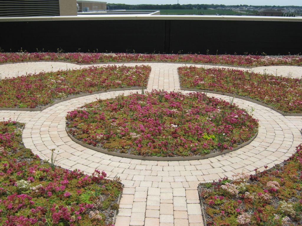center of green roof with walking path design