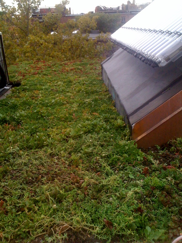 just the green roof installed
