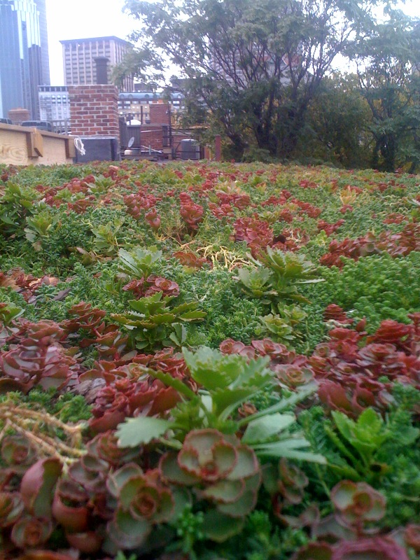 level view of plants in green roof