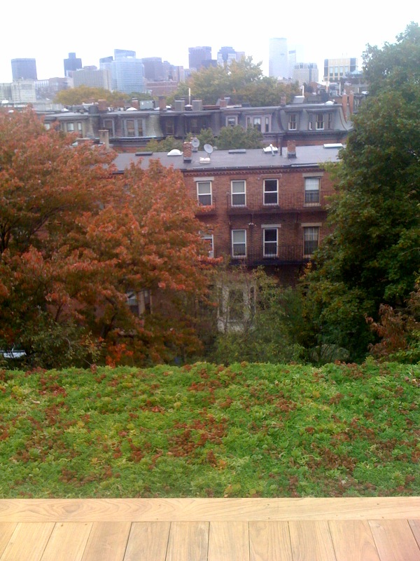 green roof looking towards apartment buildings near by