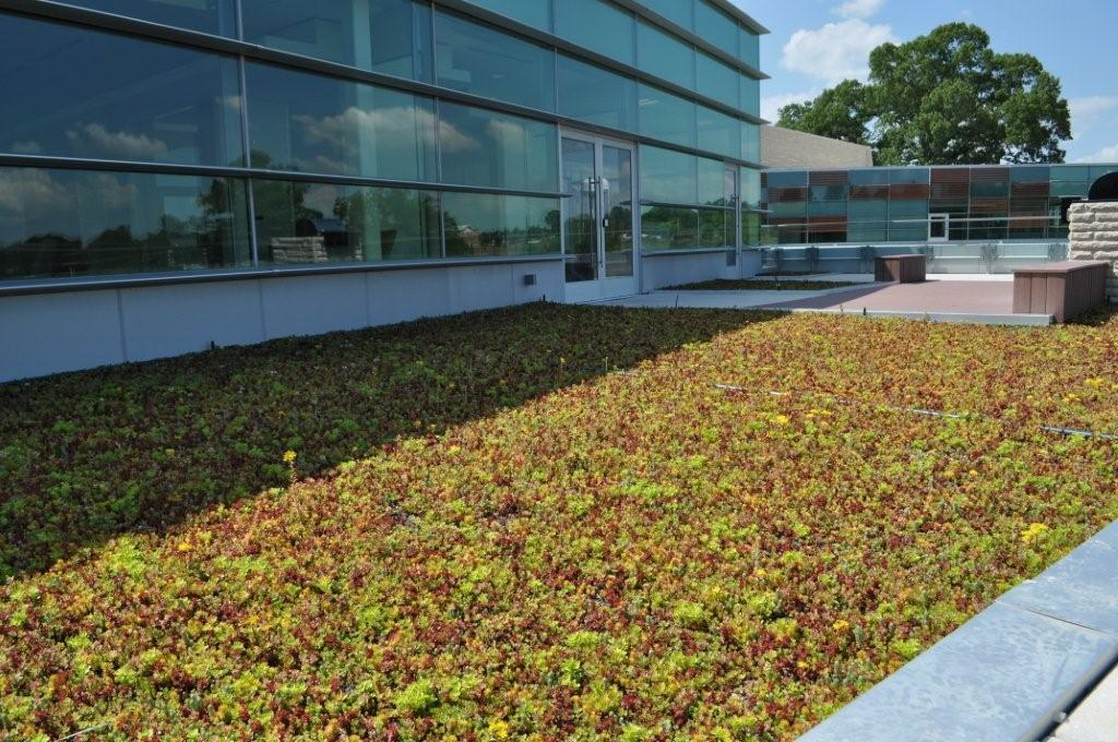 LiveRoof green roof at Founders Federal Credit Union in Lancaster South Carolina