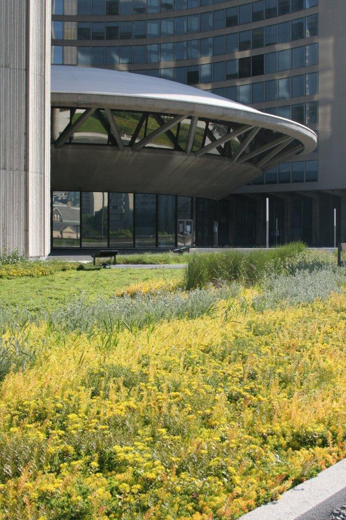other plants also installed at the green roof