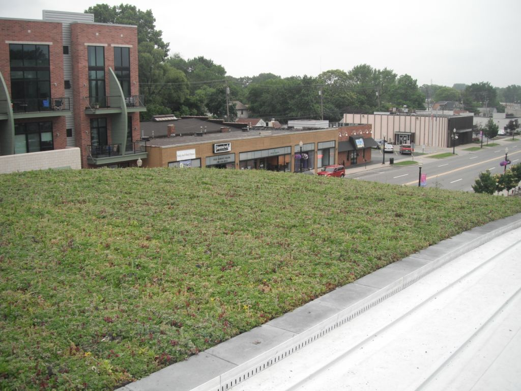 Michigan Living Roof at Ferndale Public Library