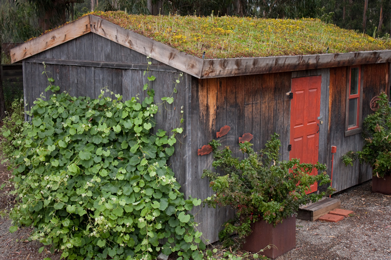 Garden Shed Green Roof by LiveRoof