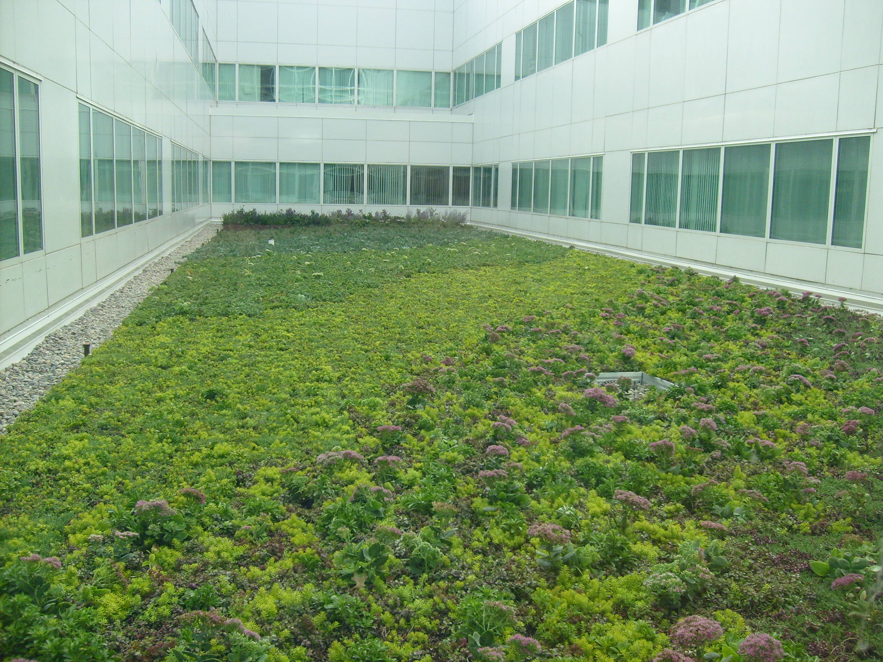Heart Shaped Green Roofs For Valentines Day