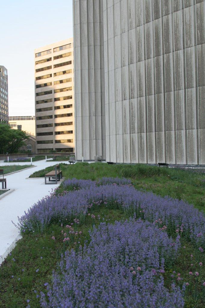 Flowering plants of the green roof