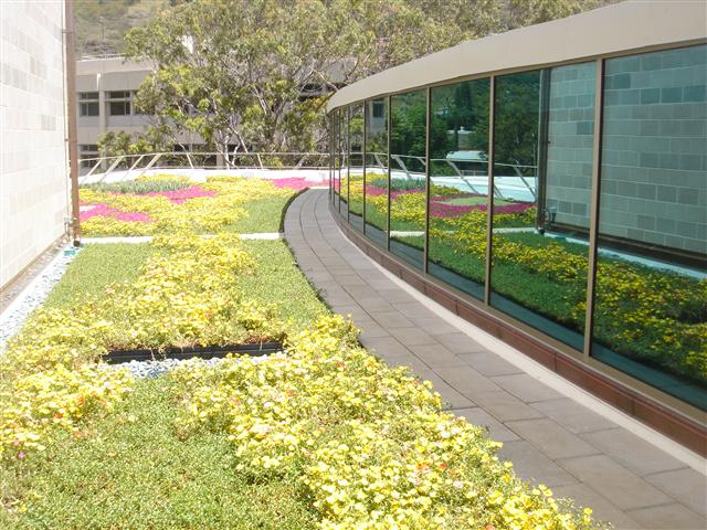 honolulu hawaii living roof by liveroof