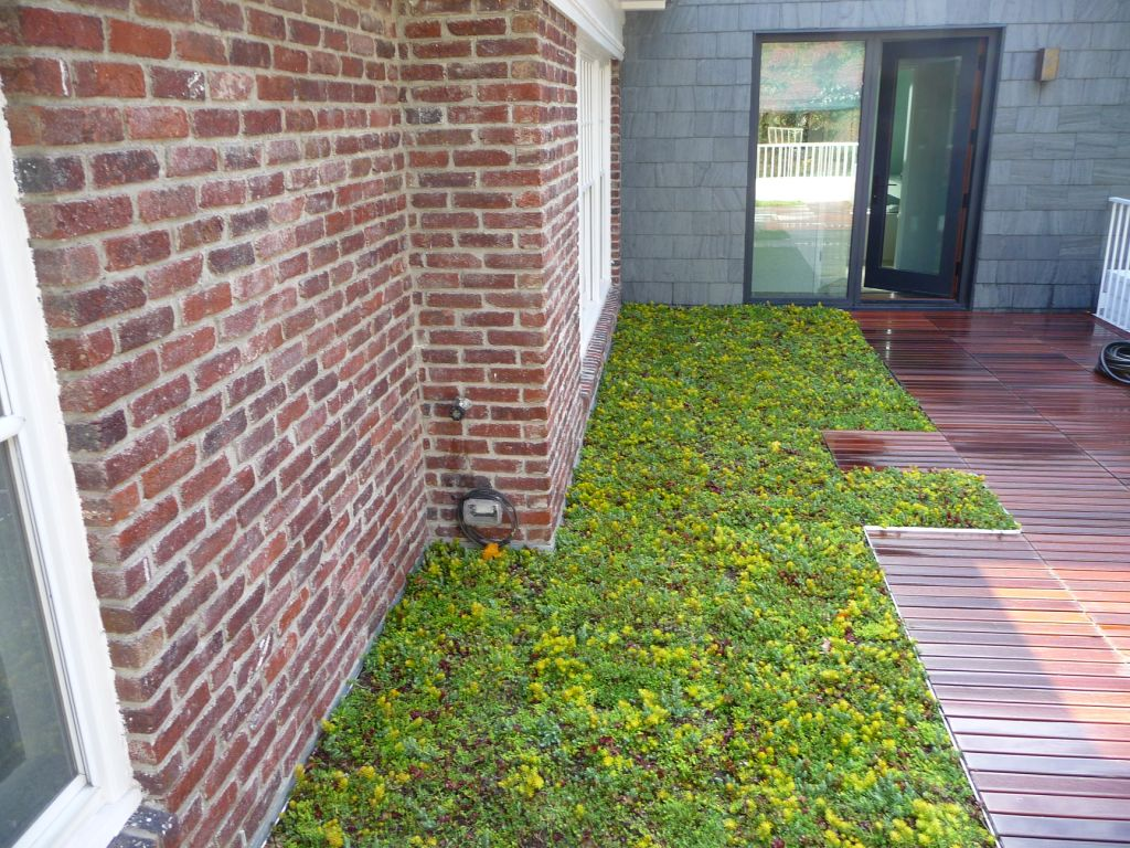 montclair new jersey green roof by liveroof