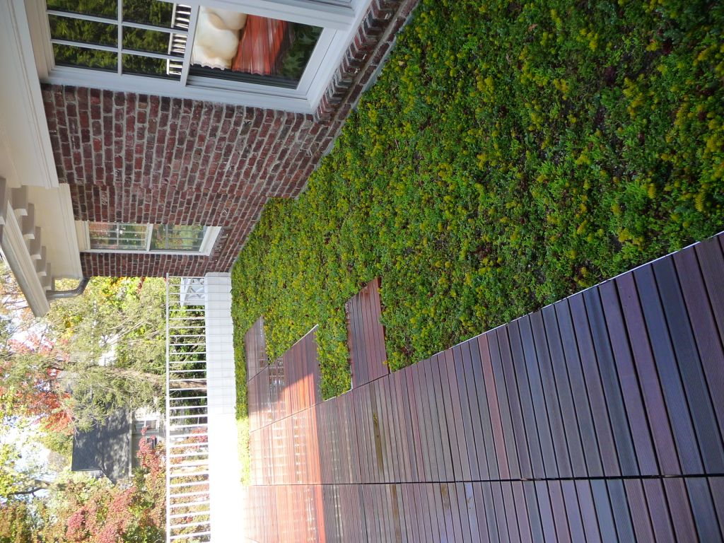 montclair new jersey living roof by liveroof