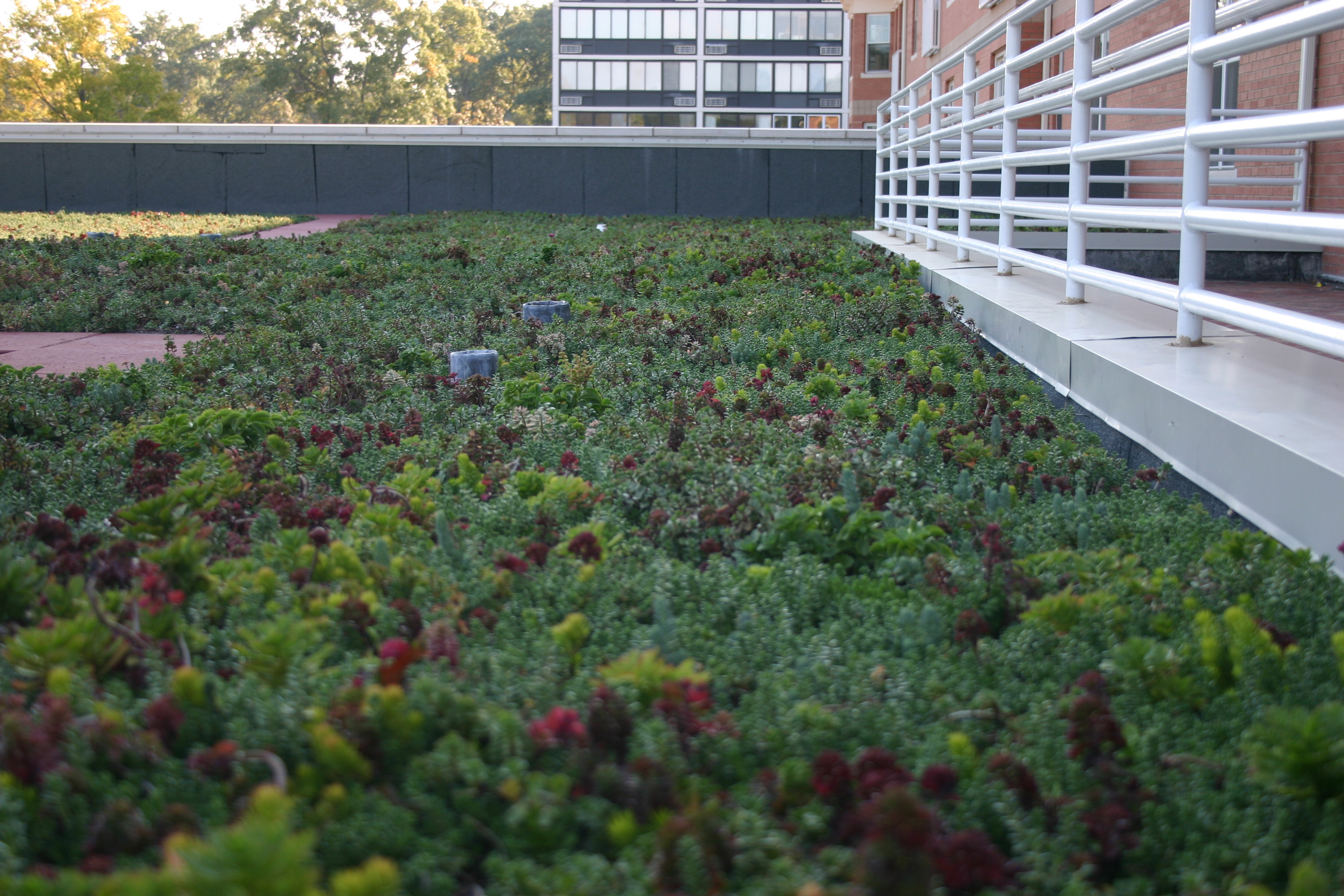 Memphis Tennessee Green Roof by LiveRoof