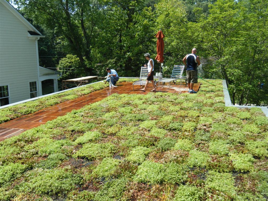 maryland residential green roof liveroof