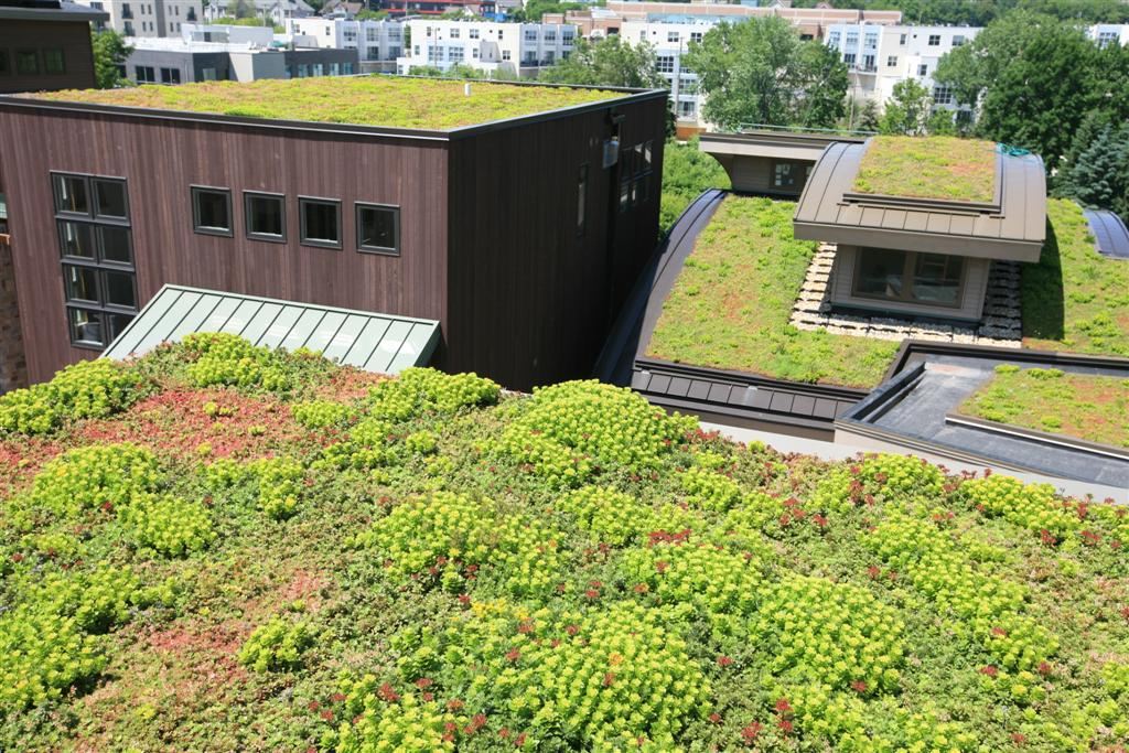 Liveroof Hybrid Green Roofs Showcase View