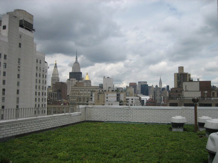 new york city green roof by liveroof