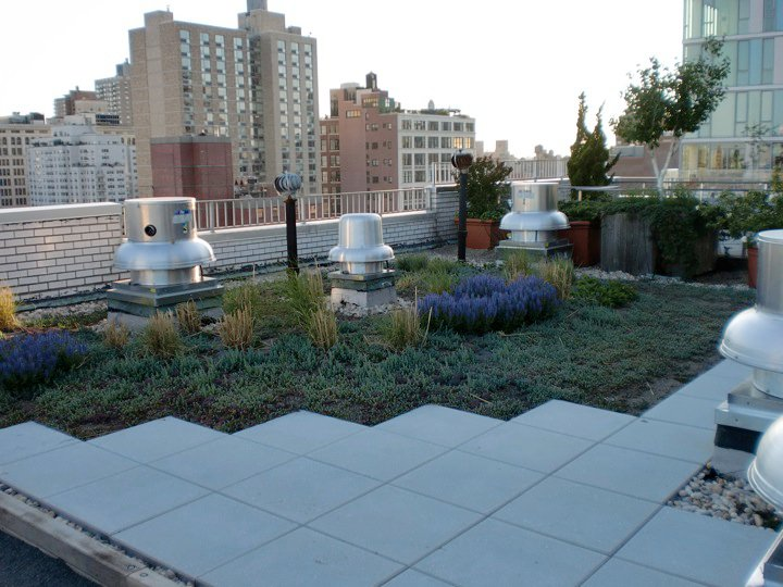 new york city living roof by liveroof