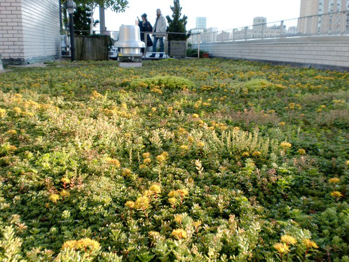 new york city vegetated roof by liveroof