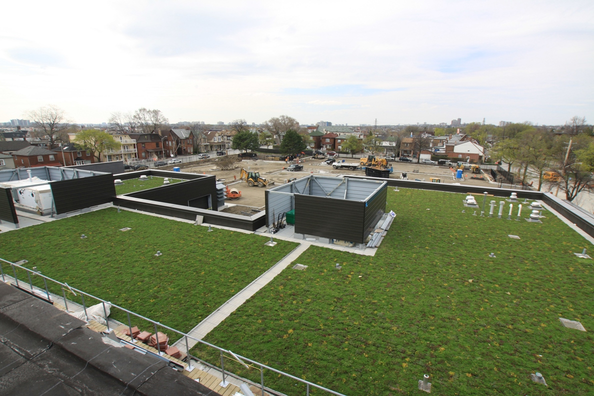 toronto green roof by liveroof