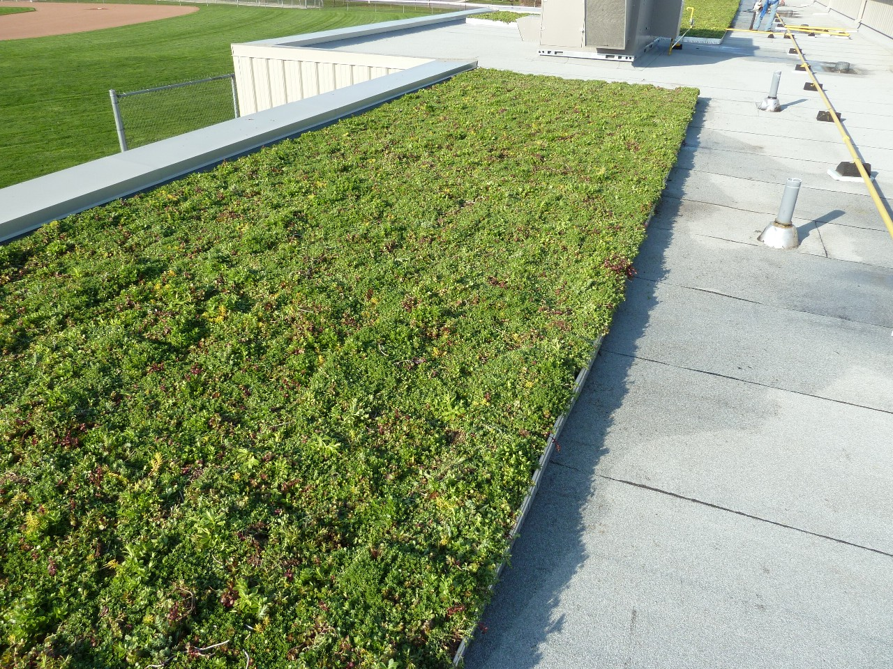 stratford ontario living roof by liveroof