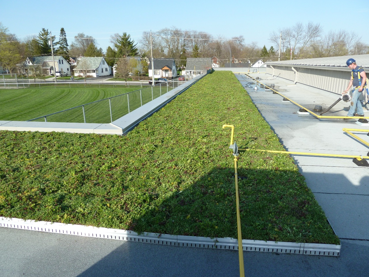 stratford ontario vegetated roof by liveroof