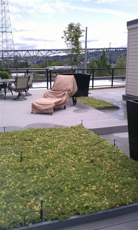 seattle washington vegetated roof by liveroof
