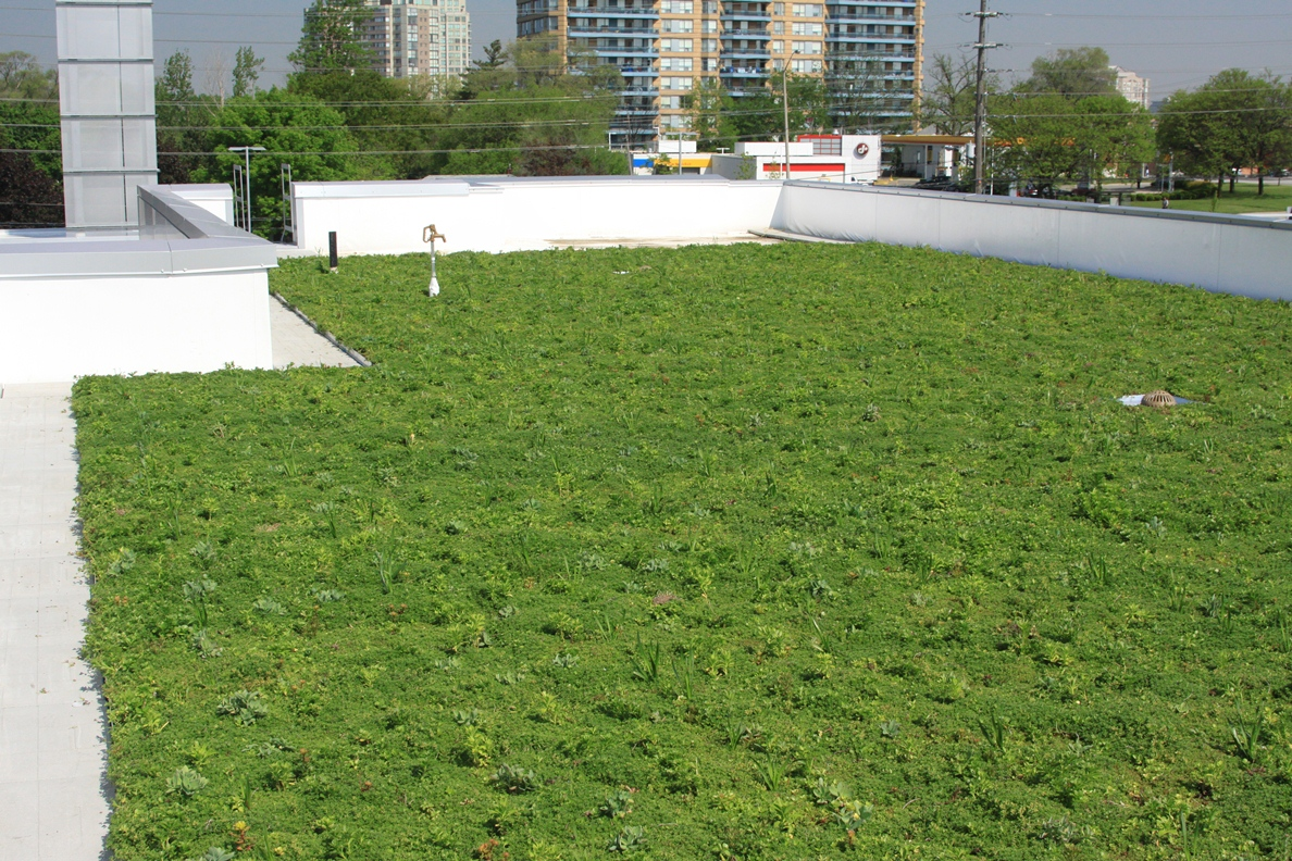 mississauga vegetated roof by liveroof