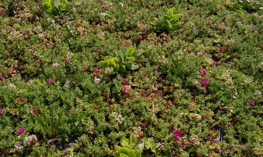 rockford illinois green roof by liveroof
