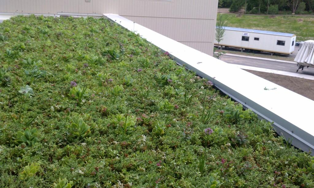 rockford illinois living roof by liveroof