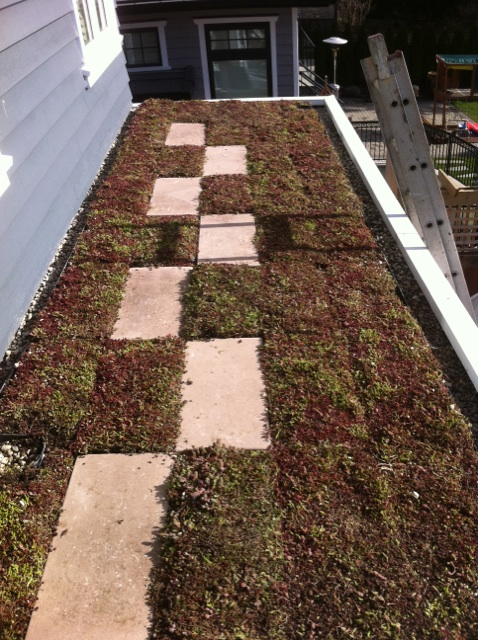 vancouver brithish columbia green roof by liveroof