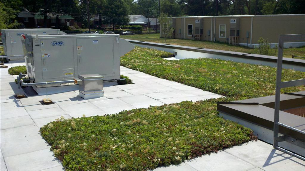 maryland green roof by liveroof