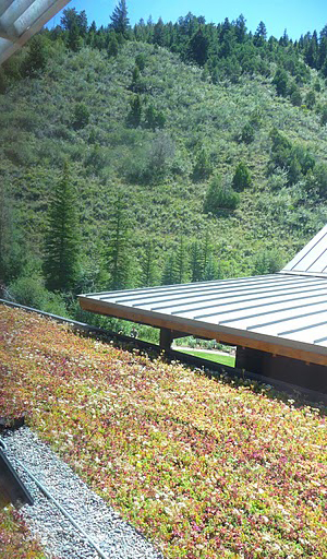 avon colorado living roof by liveroof