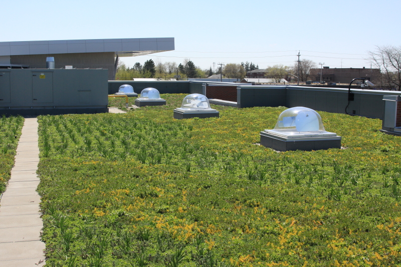 ontario canada green roof by liveroof