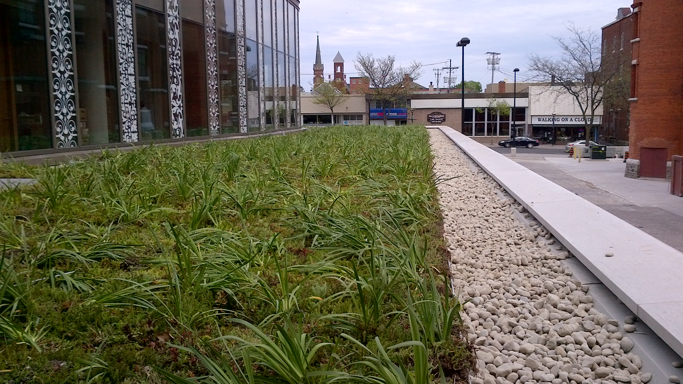 plants of green roof in Orilla, ON Canada