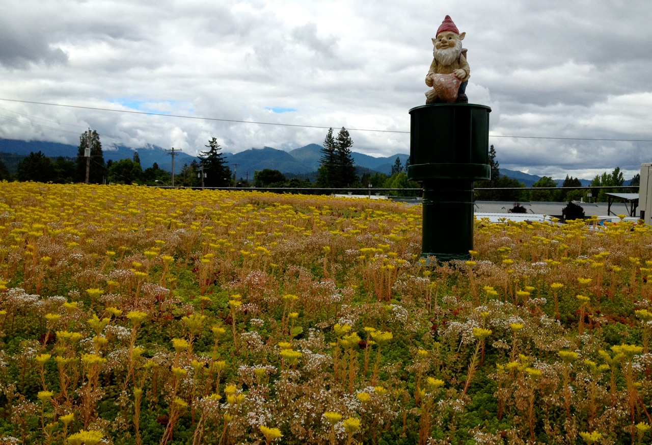 Green Roof in Grants Pass, OR