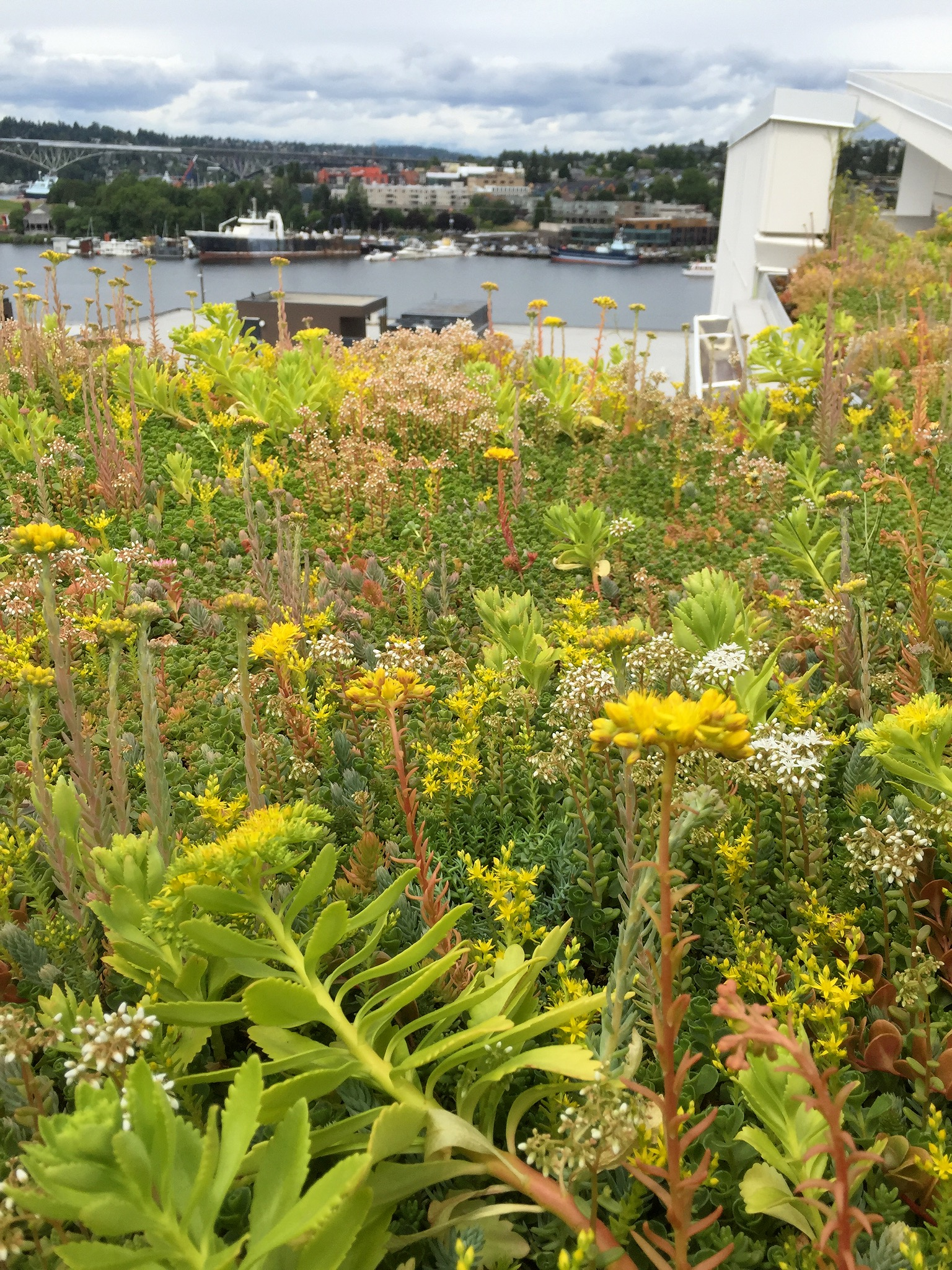 Green Roof at 2820 in Seattle, WA