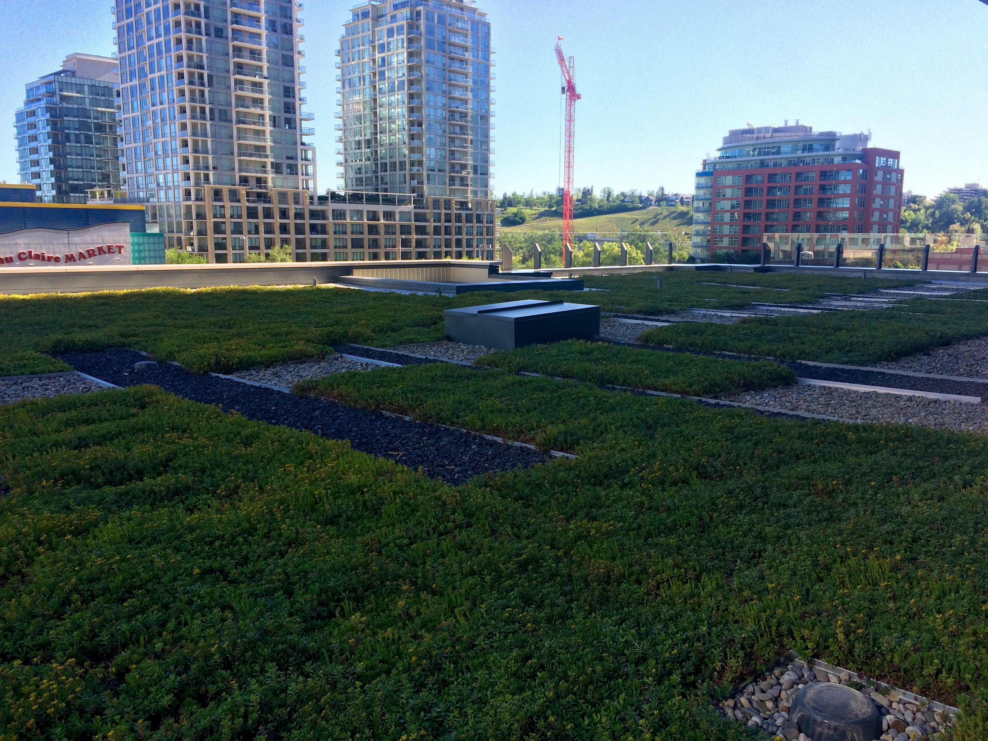 Calgary green roof by LiveRoof
