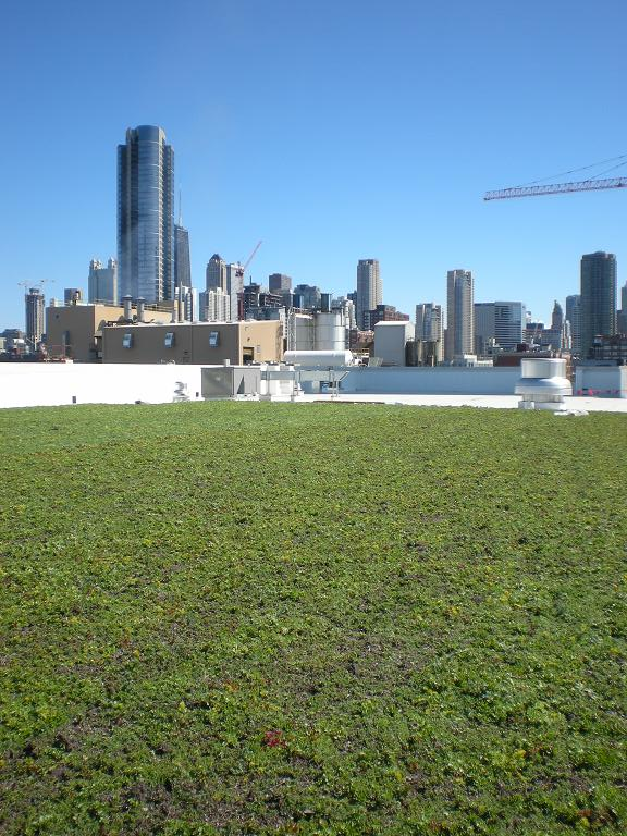 Chicago Jewel Osco Living Roof by LiveRoof