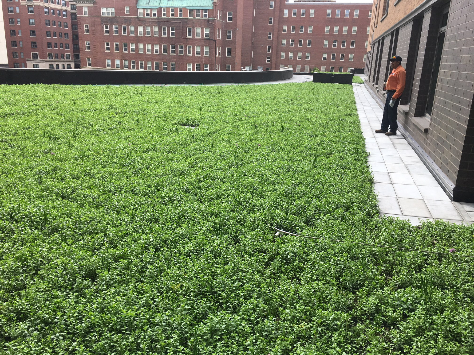 Marquette University student housing green roof