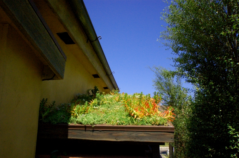 Green Roof installed on a shed at a residential home