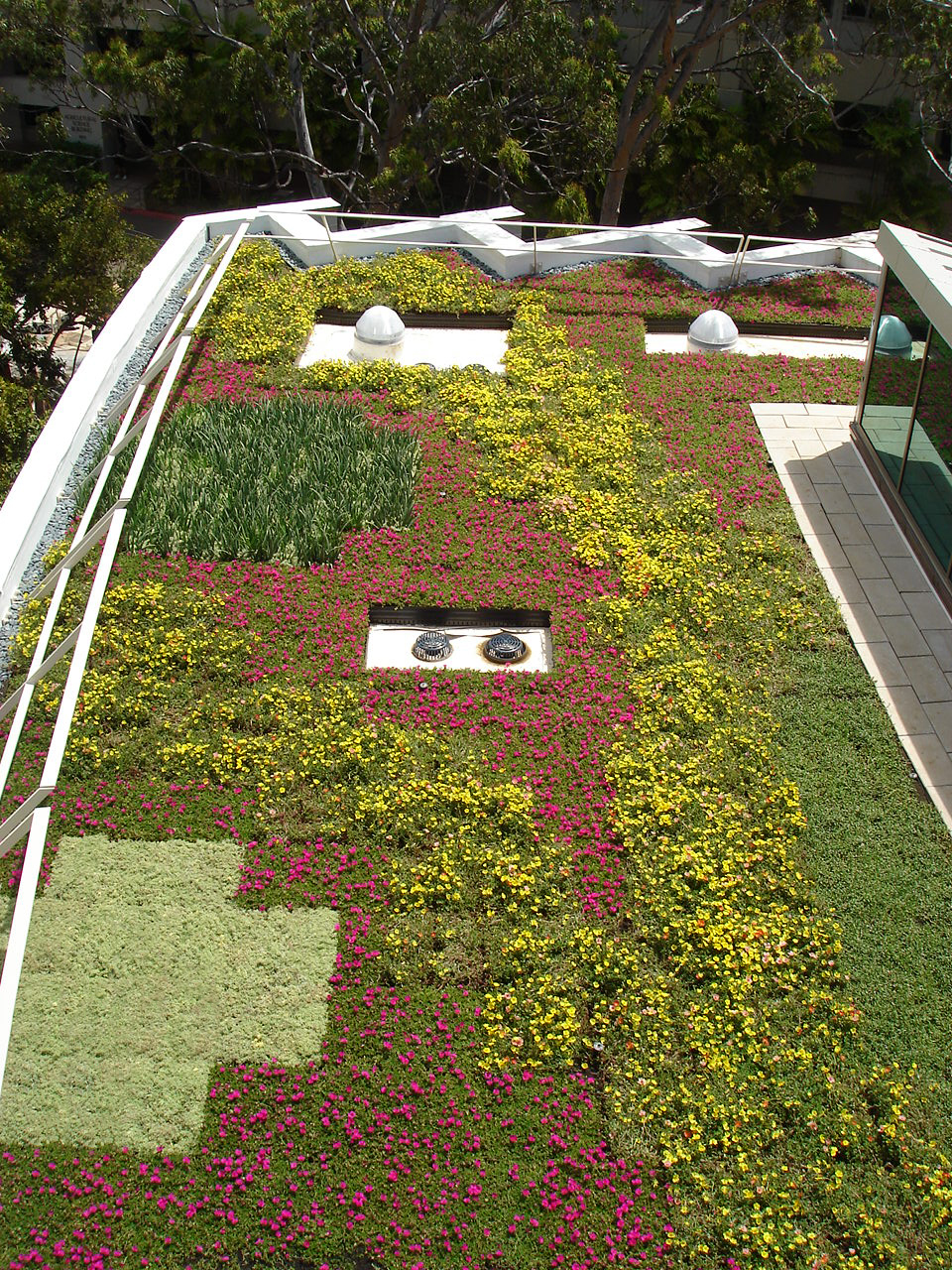 honolulu hawaii green roof by liveroof