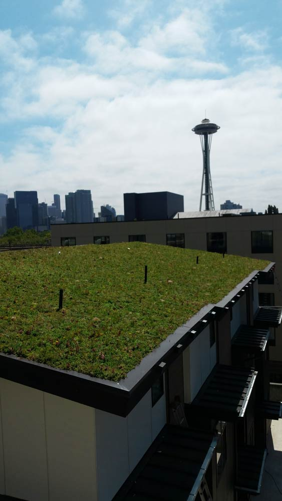 Valley Street Townhomes Seattle Green Roofs
