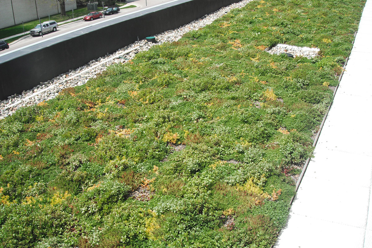 Police department in Warren installed a green roof