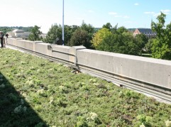 Liveroof Hybrid Green Roofs Growing Pride On A Roof Top