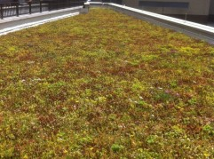 The LiveRoof hybrid green roof system was installed atop Community College of Philadelphia.
