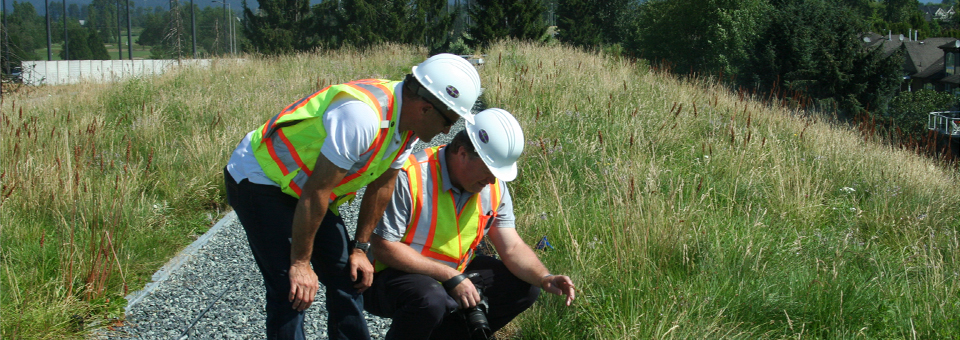 LiveRoof expert green roof representatives inspect a vegetative roof in British Columbia.