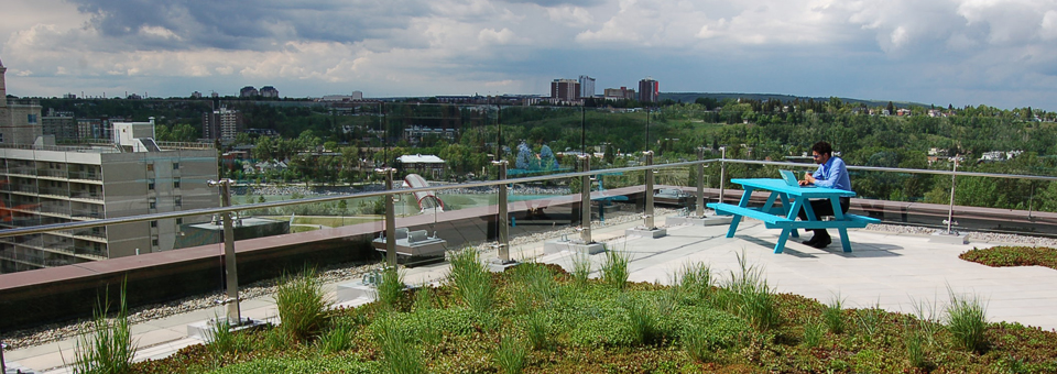 Vegetated Roof in Calgary, Alberta, Canada.