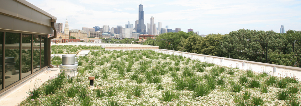 Liveroof Hybrid Green Roofs Resources For Architects And